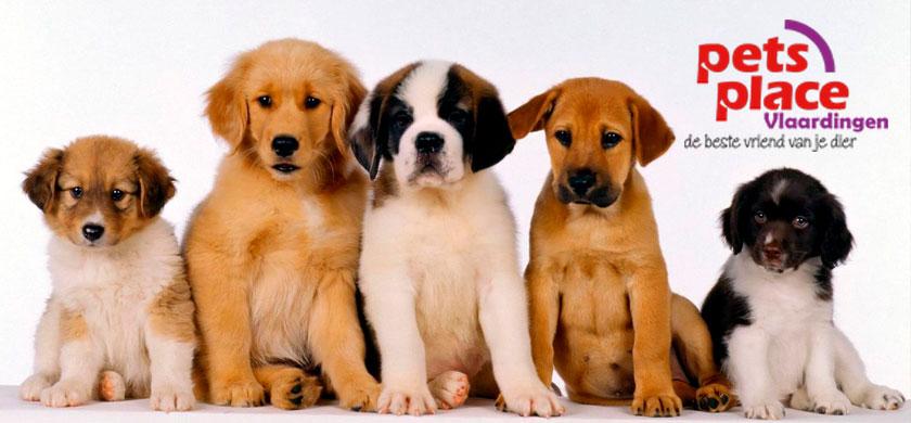 Gratis entree bij puppyactie